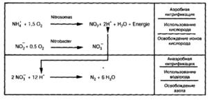 Схема анаэробного типа биологического окисления