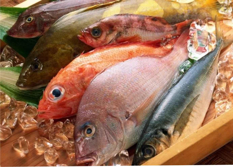 Где купить охлаждённую рыбу высокого качества
